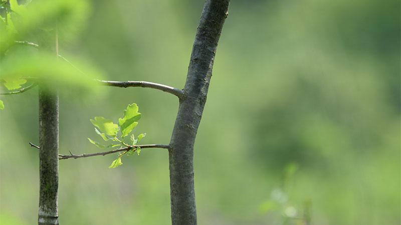 Biologie: Es grünt so grün …