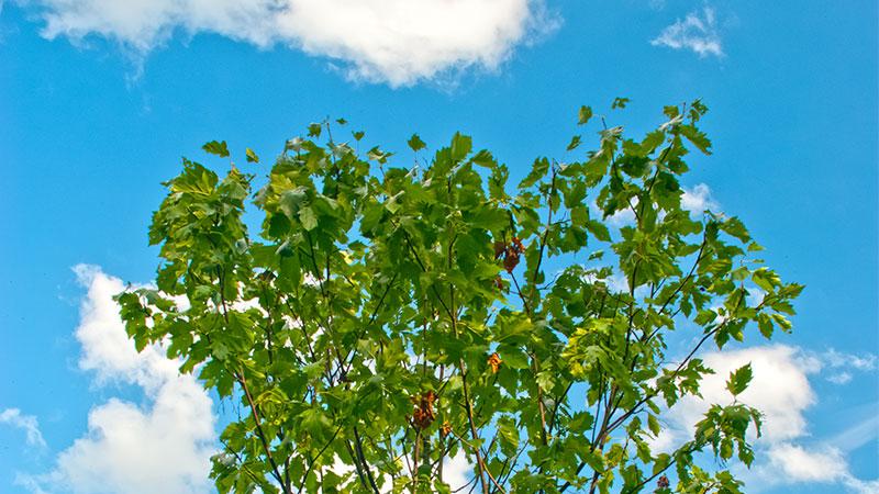 Neuer Asphalt lässt Bäume wachsen