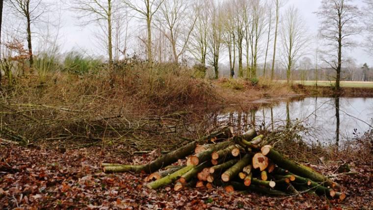 Biotoppflege auf dem Schoellerhof, 21.02.2015